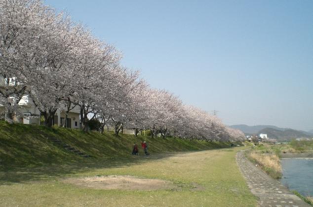 Sakura1104131